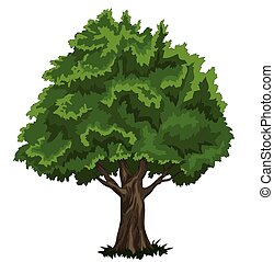 "Oak tree - Vector file ""Oak tree"""