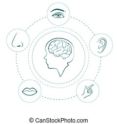vector five senses icons, human nose, ear, eye and mouth ...