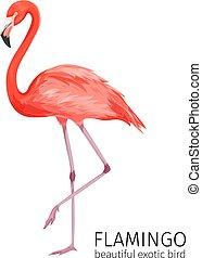 Vector flamingo bird