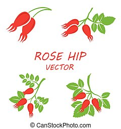 Vector flat rose hip icons set on white background