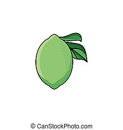 vector flat sketch style green fresh ripe lime
