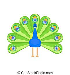 Vector flat style illustration of peacock.
