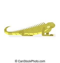 Vector flat style illustration of iguana