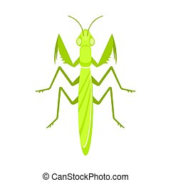 Vector flat style illustration of mantis