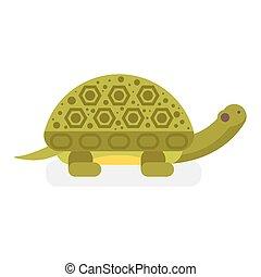 Vector flat style illustration of turtle.