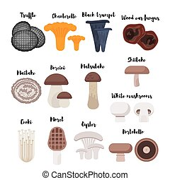 Vector flat style set of mushrooms. Icon for web. Isolated...