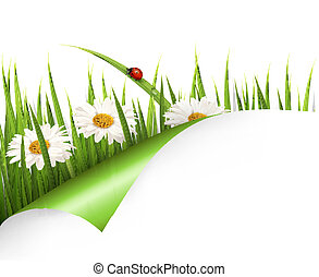 vector., fleurs ressort, ladybug., fond, herbe