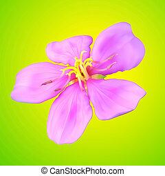 vector, flor, ilustración, malla