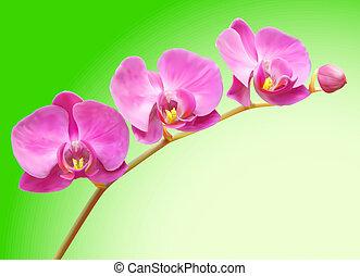 vector, flor, ilustración, orquídea