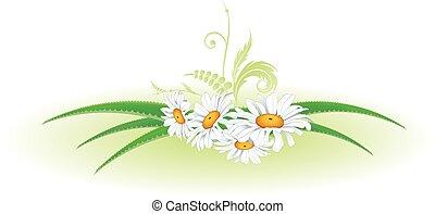 aloe and daisy