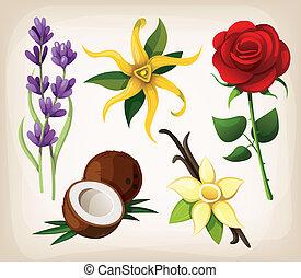vector, flores, colección