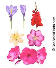 Vector Flower SEt: Pink Phlox, Lily, Gladiolus, Clematis, Crocus