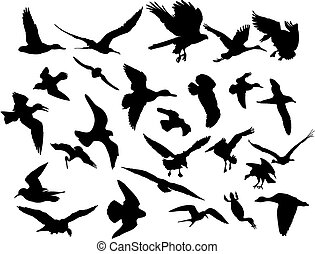 Vector flying birds - Vector illustrations black silhouettes...