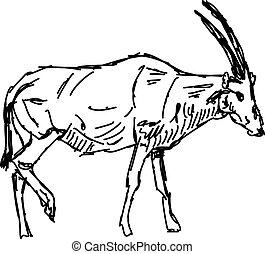 vector, fondo., ilustración, dibujo, blanco, oryx