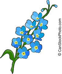 vector forget me not flower