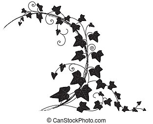 ivy - vector frame with branch of ivy