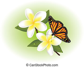 vector frangipani and butterfly