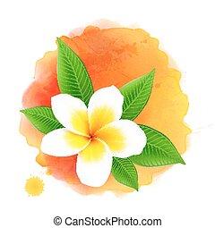 Vector frangipani flower on orange watercolor background