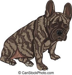 vector french bulldog