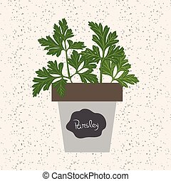Vector - Fresh parsley herb in a flowerpot. Aromatic leaves used to season meats, poultry, stews, soups, bouquet granny