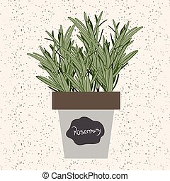 Vector - Fresh rosemary herb in a flowerpot. Aromatic leaves used to season meats, poultry, stews, soups, bouquet granny