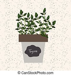Vector - Fresh thyme herb in a flowerpot. Aromatic leaves used to season meats, poultry, stews, soups, bouquet granny