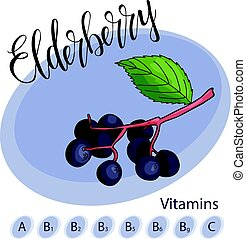 Vector fruit element of elderberry. Hand drawn icon with lettering. Food illustration for cafe, market, menu design.