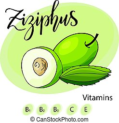 Vector fruit element of ziziphus. Hand drawn icon with lettering. Food illustration for cafe, market, menu design.