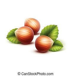 Vector Full Unpeeled Realistic Hazelnuts with Leaves Close...