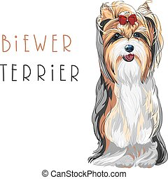 Vector funny Biewer Yorkshire Terrier dog sitting - Cute...
