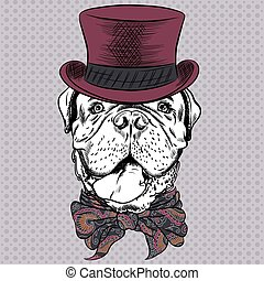 vector funny cartoon hipster dog French Mastiff - Dog French...