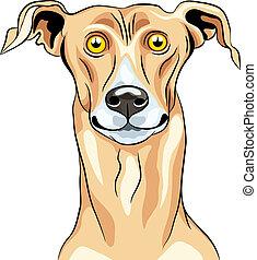 vector, glimlachen, ras, windhond, dog
