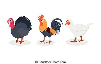 vector, granja, pavo, pájaro, conjunto, emplumado, gallina