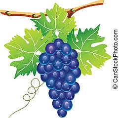 vector grape cluster