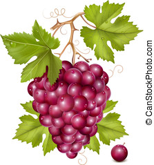 Grape cluster with green leaves and water drops. - Vector. ...