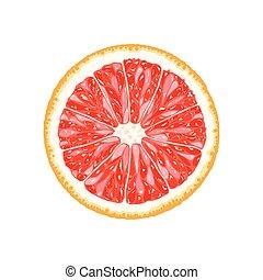 Vector grapefruit, pomelo slice. Illustration of citrus