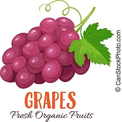Vector grapes illustration