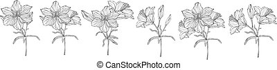 vector graphics of a floral composition with flowers lilies