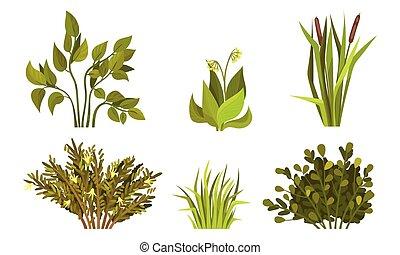 vector, gras, sterke drank, riet, anders, plant, struiken, ...