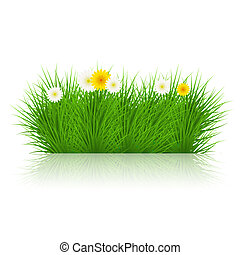 Vector grass on white background. eps10