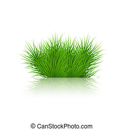 Vector grass on white background. eps10