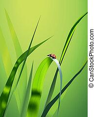Vector grass - Summer Illustration (green vector grass and...