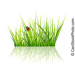 grass with ladybird isolated