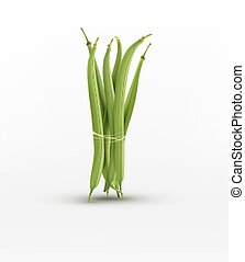 vector green beans bound sheaf isolated on white background