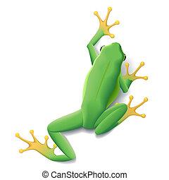 Vector Green frog illustration