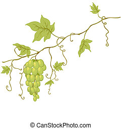 Vector green grapes. - Vector green grapes with leaves...