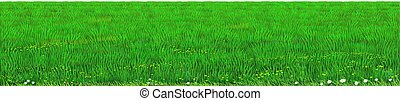 Vector green lawn grass texture. Background green horizon vector. Realistic eco natural landscape. Lawn grass and plants