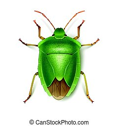 Green stink bug - Vector Green stink bug close up top view...