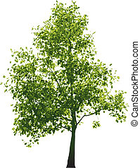 Vector green tree - isolated on white background