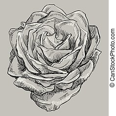 Vector grey flower 4